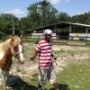 mot-horse-3