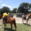 mot-horse-5